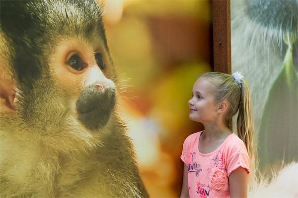 Monkey test - Apenheul